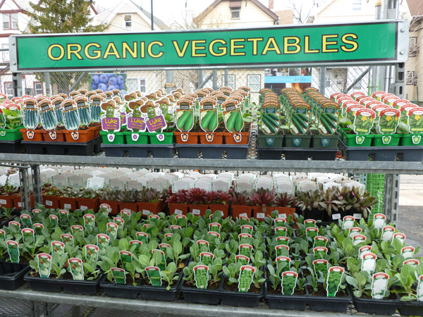 Count On Organic Seeds And Plants From Orange Garden. You Will Get The Best  Varieties Of Corn, Tomatoes, Squash, Cucumbers, Peppers, Beans, And More.